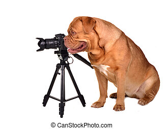 Dog photographer with camera placed on tripod