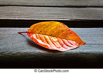 All Alone (Fall Leaf) - Yellow and orange oblong fall leaf...
