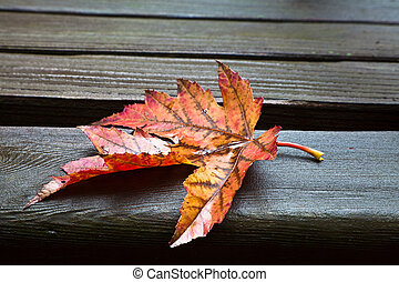 All Alone Fall Leaf - Red, yellow and orange maple fall leaf...