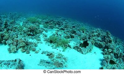 Barrels of oil after shipwreck, reef Tiran, Red Sea, Egypt.