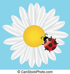 Ladybird on Daisy on blue background. vector illustration