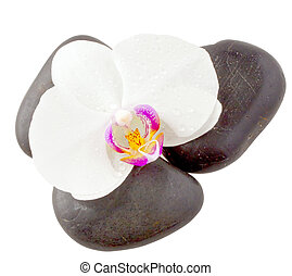 Orchid and stones - Close up of orchid over three black...