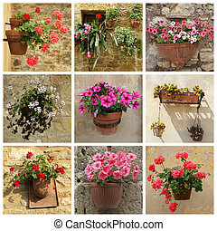 collage of flowers in pots