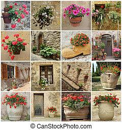 jardinería, collage