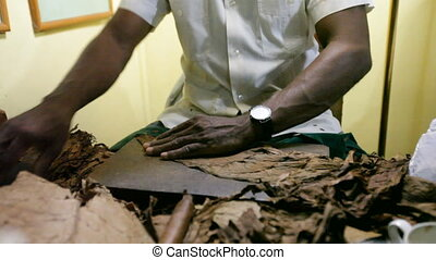 Manufacturing of cigars. Cuba.