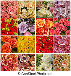 collage, roses