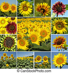 sunny collage