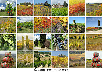 collage with vineyards - collage with beautiful landscape of...