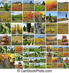 collage with vineyards - collage with italian vineyards in...