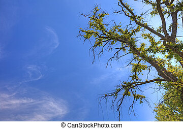 Old tree and sky as background with empty space for your design.