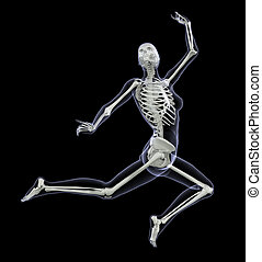Skeleton in Motion - Woman Leaping 1