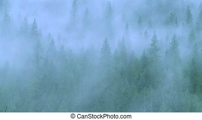 Mist in the Forest 01