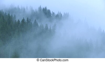 Mist in the Forest 03