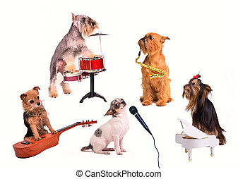 Dogs orchestra band performsnew composition
