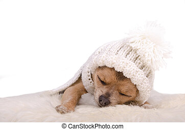 Newborn puppy sleeping lying on white fluffy fur, isolated...