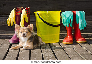 Small dog lying near items for cleaning and rubber boots -...