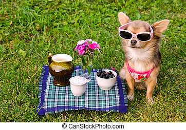 Little dog wearing pink t-shirt relaxing in meadow picnic -...