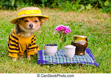 Small dog wearing suit and straw hat relaxing in meadow -...