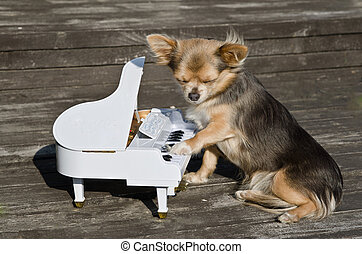 Small dog is playing on a toy piano on sunny stage -...
