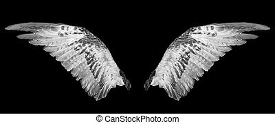 Two wings isolated on a black background