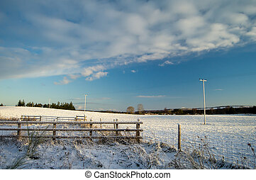 Wintry Field - Cold snowy morning by the field