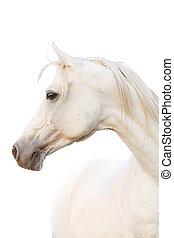 白色, 馬