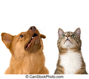 狗, 貓, 看, 向上