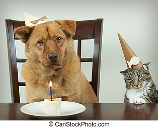 Pet Birthday party - Dog and cat sitting at the table and...