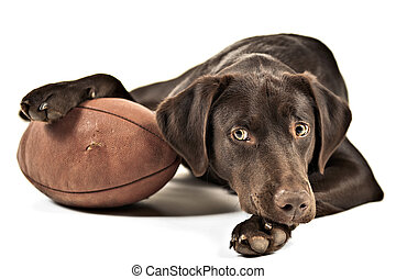 Dog with football - Dog resting his paw on American...