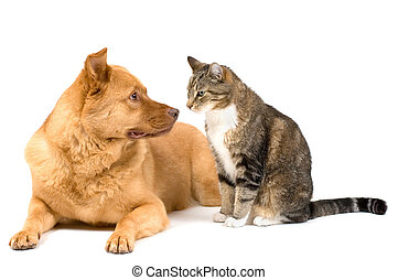 Dog and cat on white background - Dog leaning and cat...