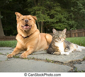 Dog and cat in the backyard