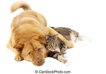 perro, gato, relajante