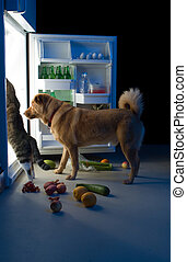 Midnight snacks - Cat and Dog searching for meat in the...