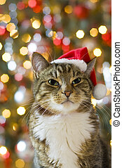Cat with Santa Claus red hat with multicolored lights in the...