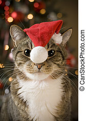 Cat with red hat - Cat with Santa Claus red hat looking at...