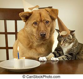 慶祝, 生日, 狗, 貓