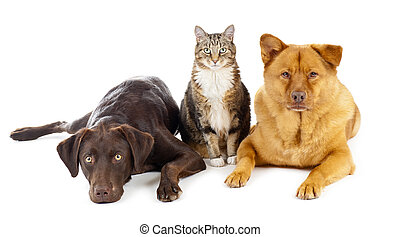Three pets together - Cat and dogs together