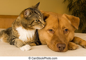 Cat and Dog - Cat and dog resting together on bed