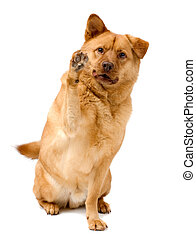 Dog high five - Dog giving a high five with paw
