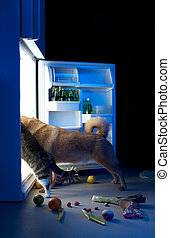 Midnight snack - Dog and cat looking for meat in the...