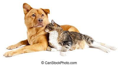 Dog and cat together - Dog and cat leaning against each...