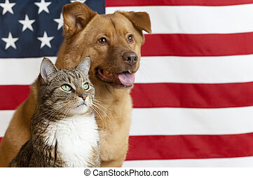 American cat and dog - Proud American pets with US flag in...
