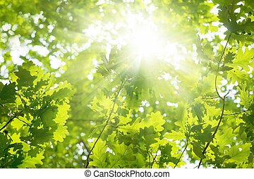 Beatiful green leaves - Ecological background - green leaves...