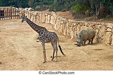 giraffe and rhinoceros in the Jerusalem Biblical Zoo Israel