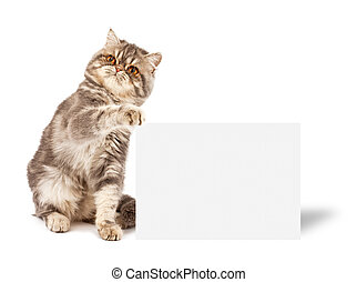 Kitten with placard