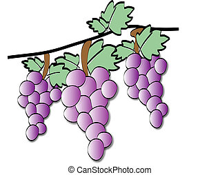 Three bunches of grapes  - Three bunches of blue grapes