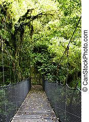 Swing bridge in forest - Swing bridge in tropical rain...
