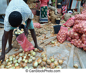 Africa - crop of onions