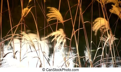 river reeds in wind,shaking wilderness,reflection,Hazy style...