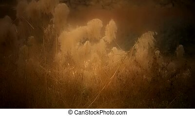 river reeds in wind,shaking wilderness,Hazy style.